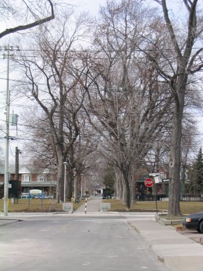 Dovercourt Park - Winter